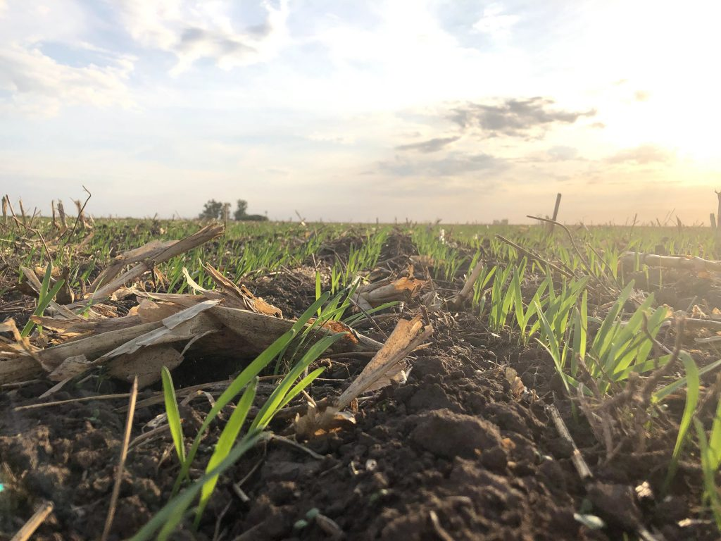Argentina: Solo la soja paga más derechos de exportación/ha que la leche