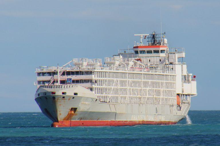 (Español) Nueva Zelanda prohibe la exportación de ganado en pie en barco.